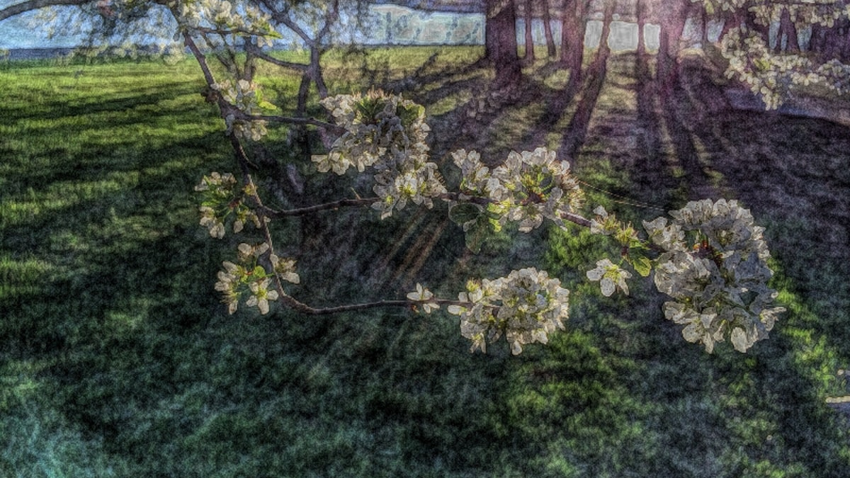 light streaming through blossons
